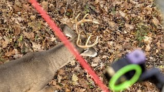 How To Attract More Bucks To Your Hunting Land