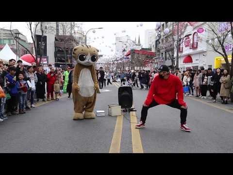 JHKTV]명물고양이와디오비 special cat k pop dance &dob (양성렬 )yang sung yeol boombayah 붐바야