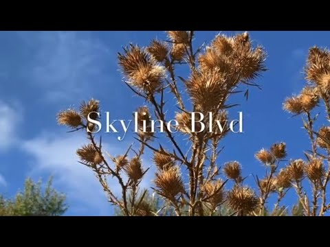 fall vlog :出游赏秋-Weekend hike ,九九重阳节-带奶奶一起登高望远 【纷享 Art.Fun.Share】 Skyline Ridge Parking Lot