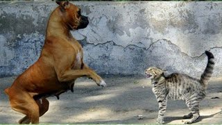 Dogs scared of cats - Funny dog & cat Compilation