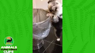 Adorable Puppy Investigates Trashcan | Animals Doing Things
