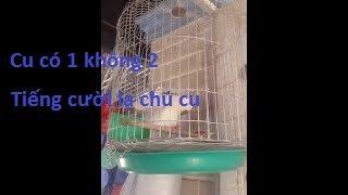 Chim Cu gái độc nhất vô nhị, xem cho biết