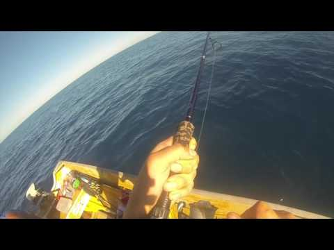 Light Tackle Tuna