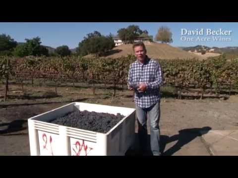 One Acre Napa Valley - Yountville AVA Episode 14 - 2014 Crushing of Fruit