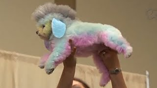 Dog Grooming Expo - The Cute Show - VICE