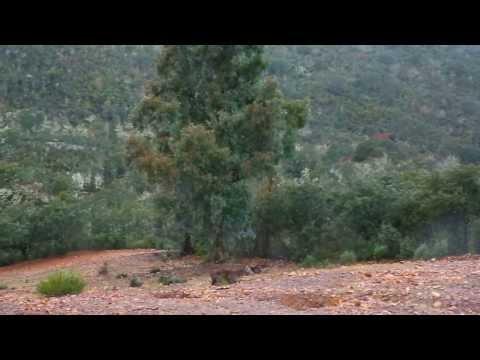Pogonski lov u Španjolskoj