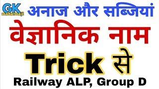 अनाज एवं सब्जियों के वैज्ञानिक नाम   Science gk Tricks   Railway ALP, Group D 2018