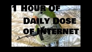 1 Hour of Daily Dose of Internet