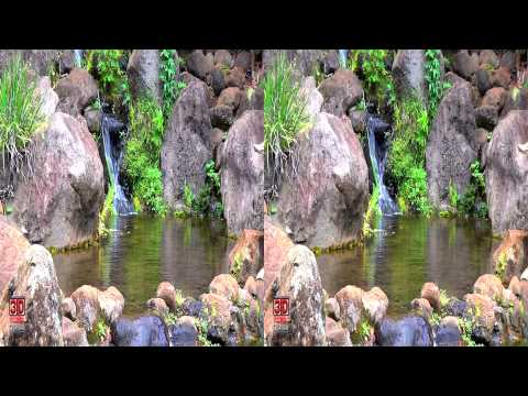 3D Pond FREE 3D Video Everyday N°45