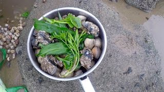 Coastal foraging with Craig Evans (razor fish, clams and wild greens)