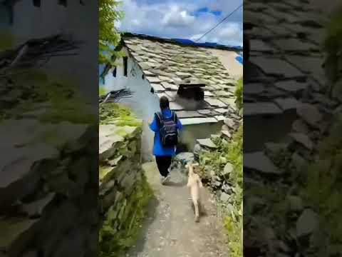 Little girl walks to school as goat follows her in adorable viral video