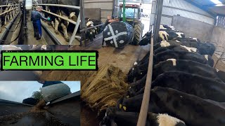 """""""A DAY IN MY LIFE""""  REAL LIFE DAIRY FARMING -- IT'S A LIFESTYLE NOT A JOB --"""