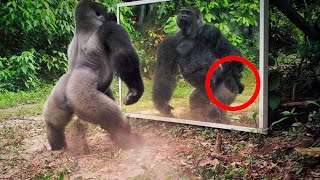 Look What Happens When Animals See Themselves in the Mirror...