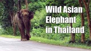 Videos of Animals in Thailand