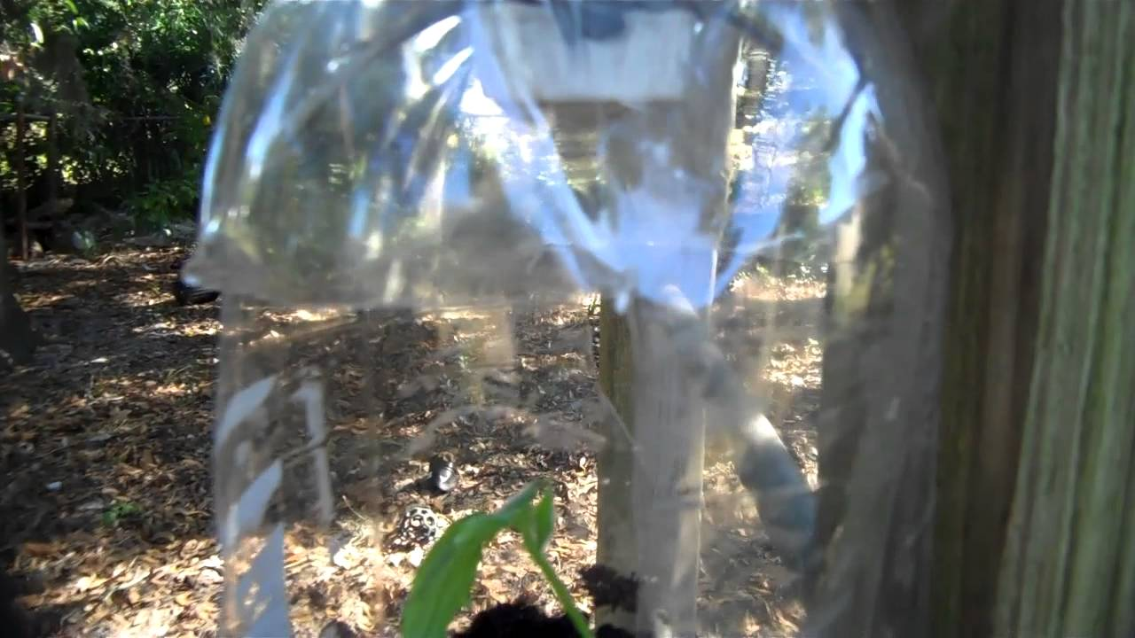 Hanging Bottle Garden Made From Recycled 2 Liter Bottles
