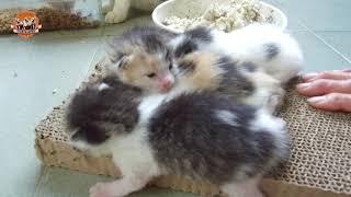 酒酒多多果園失蹤記+果園的貓咪家族