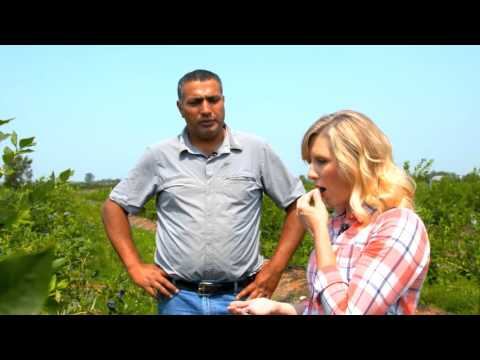 WaGrown Blueberries S3E2: Samson Farms