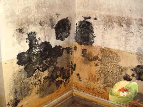 Is Black Mold Dangerous Youtube