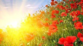 GOOD MORNING MUSIC ➤ Rise Up Positive Energy ➤ 432Hz Beautiful Meditation Music