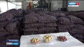 Омские аграрии изо всех сил торопятся собрать урожай до снега