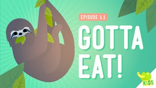 Gotta Eat! - Crash Course Kids 1.1 - YouTube