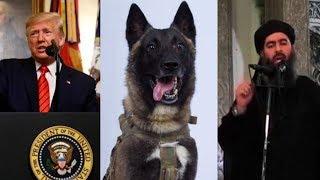 قصة الكلب الذي شارك في قتل زعيم داعش     -