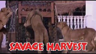Savage Harvest (1981) (480p) (English)