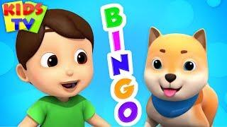 Bingo Dog Song | Boom Buddies Cartoons | Nursery Rhymes for Children