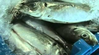 DN thủy sản Nhật Bản tìm đầu ra tại Trung Quốc