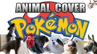 Pokemon Main Theme (Animal Cover)