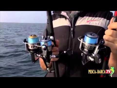 Pescare sgombri e lanzardi in Mare Adriatico