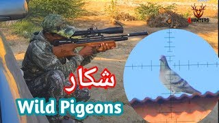 Wild Pigeons hunting with airgun Kral puncher breaker wood .25