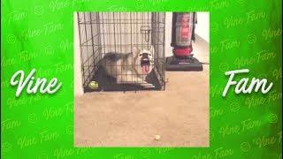 The Hidden Dog Economy
