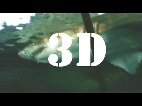 Shark Encounter (3D) SeaWorld San Diego