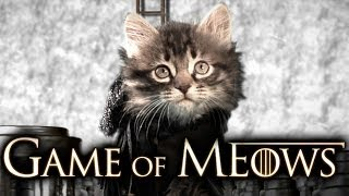 Game Of Thrones (Cute Kitten Version)