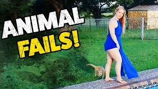 ANIMAL FAILS! | The Funniest Pet Clips On The Web | December 2018
