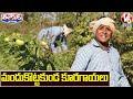 Teenmaar Sadanna Conversation With Radha Over Organic Farming | V6 Teenmaar News