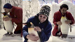 بوي باند مع البطاريق   Boyband meets the penguins