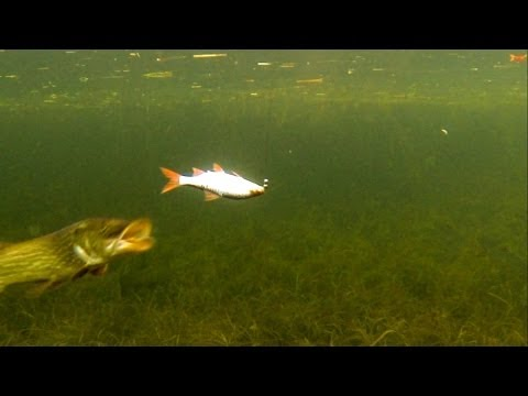 манка для рыбалки рецепт видео