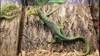 2019 North American Reptile Breeders Conference Tinley Park, IL