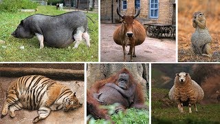 How 34 Animals Look Like Before Giving Birth to Their Babies