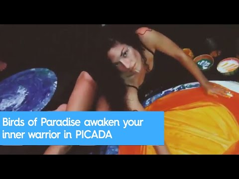 Birds of Paradise awaken your inner warrior in PICADA