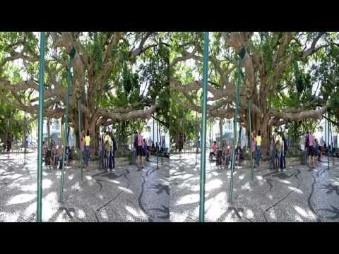 3D - Florianópolis - Praça XV (Praça da Figueira) Jan2015