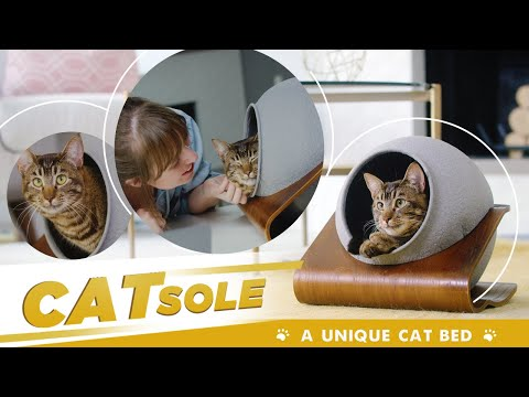 CATSOLE blends in with all kinds of home décor, making pet products a pleasure to the eye (Source: Elm Alley Pets)