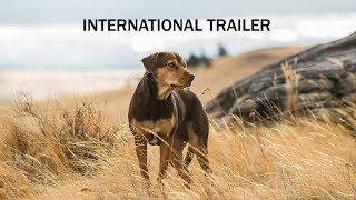 A DOG'S WAY HOME - International Trailer - In Cinemas February 28