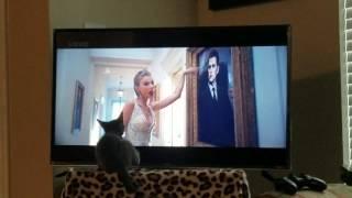 Kitten LOVES Taylor Swift!