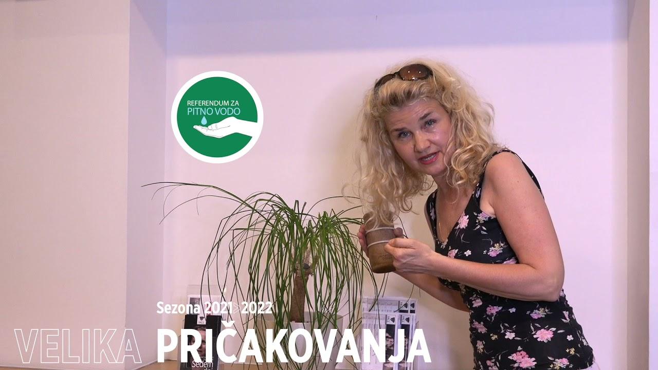 Velika pričakovanja | Tanja Dimitrievska #teaser