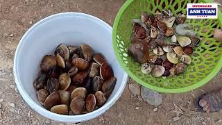 Cuộc Sống Cửa Lò: Gặp Ngư Dân Nghi Hải Đi Bắt Nghêu Trở Về