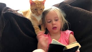 MOST Crazy Cats Annoying Babies, If You Laugh You Lose Challenge | BABY AND PET part 2