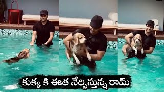 Ram Pothineni plays with dog in swimming pool..